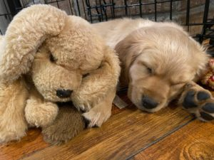 Muttsy the stuffed dog with Bingo the puppy